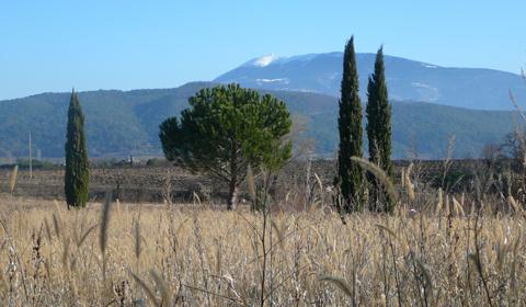 Les Tamaris Mont Ventoux